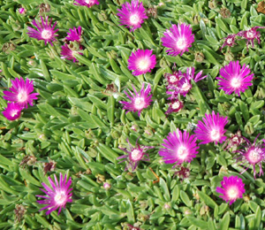 Image Result For Joy Garden